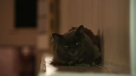 Black cat blinking eyes Footage