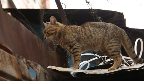 Cat on the roof of the prison with barbed wire Footage