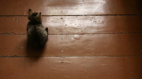 Grey Kitten On A Wooden Floor stock footage
