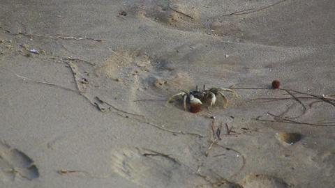 Beach Crab Footage