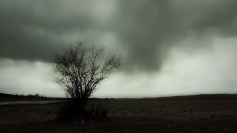 Eerie Tree in Post Apocalyptic Landscape Footage