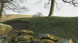 Nature landscape with Trees and drystone wall Footage