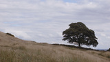 Beautiful Oak Tree Landscape stock footage Footage