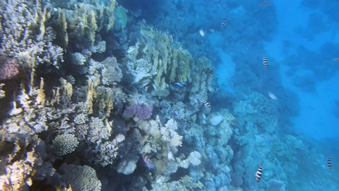snorkeling in the red sea Footage