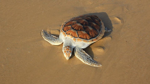 Sea Turtle Release Footage