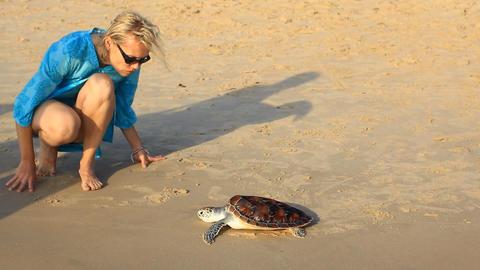 Sea Turtle Release stock footage