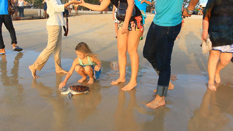 Sea Turtle Release stock footage