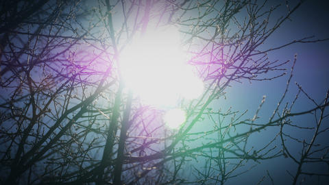 Bright Sun through Tree Branches Footage