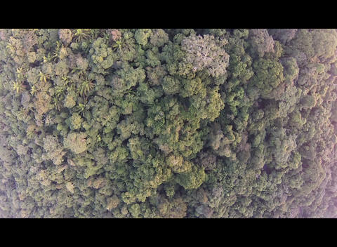 Flying over the rain forest Live Action
