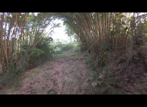 Flythrough in a bamboo grove Footage