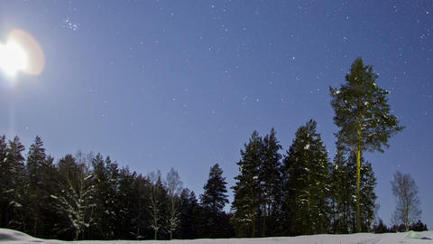 Trees in the night sky. Time Lapse Footage