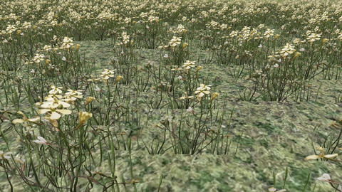 white wildflower in wind,distant mountains,3d landscape Animation