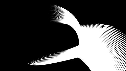 Bird twist line Animation