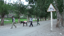 Walking Group Of Donkeys Across Dirt Road In Tajik stock footage
