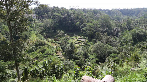 a rice terrace in ubud, indonesia 2 Footage