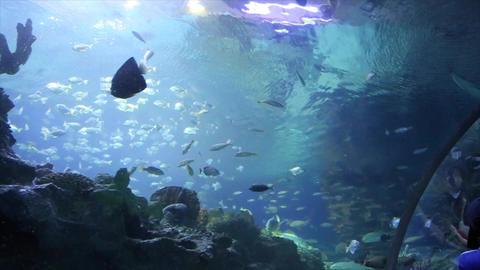 Kuala Lumpur - Aquarium Footage