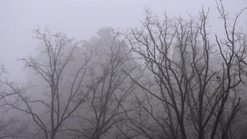 trees in fog Footage