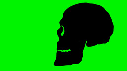 2D animated skull talking Animation