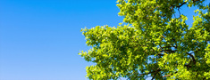 Branches Of A Tree Against The Sky stock footage