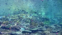 Hard coral reef with clouds of fishes Footage