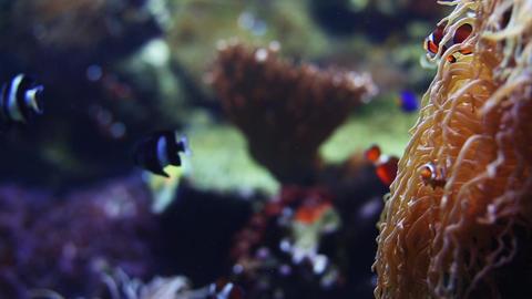 Sea Life Pull Focus shot Footage