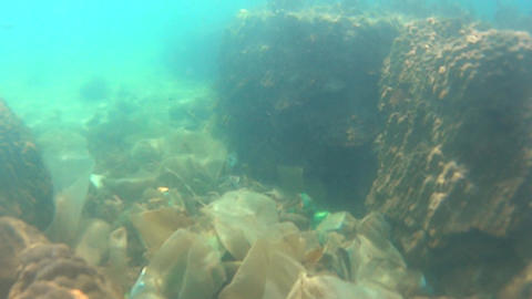 Ecological catastrophe. Underwater Footage