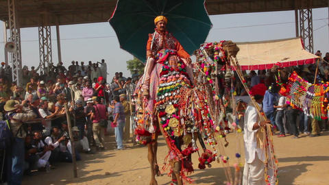 Competition To Decorate Camels At Fair In Pushkar  stock footage