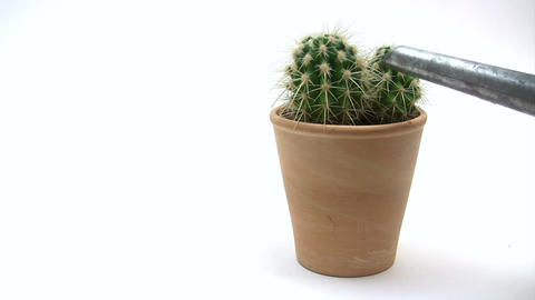 Watering Cactus Footage