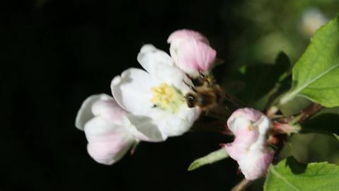 Working bee Footage