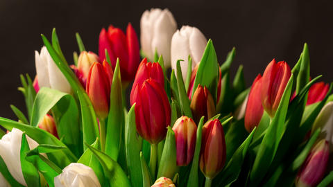 Bouquet of bright tulips blooms, timelapse 4K Footage