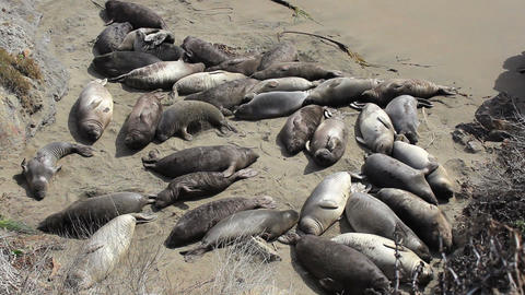 Elephant Seals Enjoying The Warm Sunshine On Beach stock footage