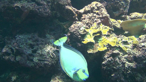 colorful fish and coral Footage