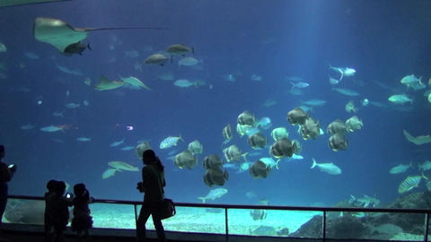 Aquarium And People stock footage