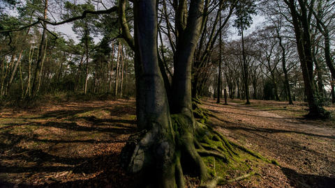 4k UHD shadows in forest time lapse 11321 Footage