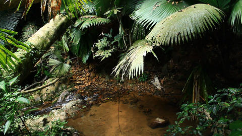 waterfall in the rainforest Footage