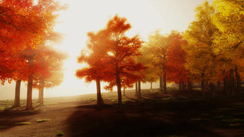 (1139) Sunshine Autumn Park Red Trees Afternoon Stock Video Footage