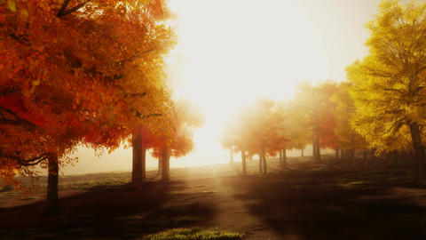 (1139) Sunshine Autumn Park Red Trees Afternoon Animation