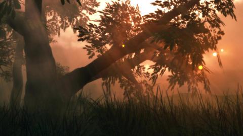 (1141) Fairy Lights Fireflies Summer Meadow Magical... Stock Video Footage