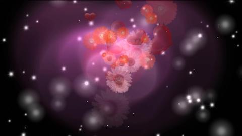 flower2b Stock Video Footage