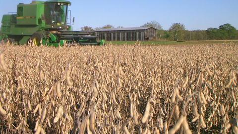 Combine Harvesting Soybeans 03 Stock Video Footage