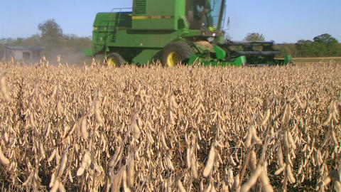 Combine Harvesting Soybeans 03 Footage