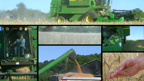 Farmer Combining Crops Composite Stock Video Footage