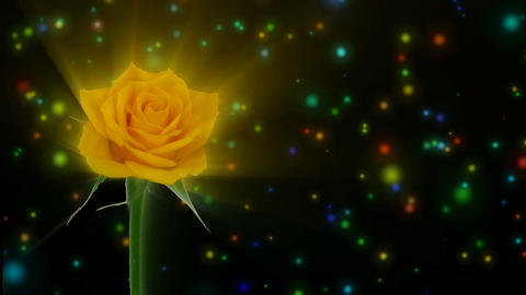 "Montage of opening yellow ""Golden gate"" rose 1 alpha matte Animation"
