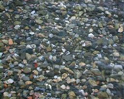 Beach Stones Stock Video Footage