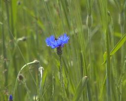 Wild Flower Stock Video Footage