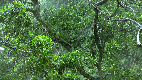 green rain forrest Stock Video Footage