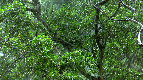 green rain forrest Stock Video Footage