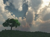 Alone Tree With Cloudscape And Sunset Aerial stock footage