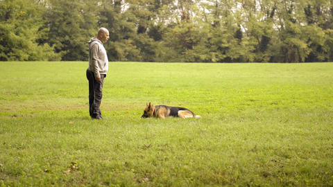 Dog Trainer Feeding And Doing Exercise With German stock footage