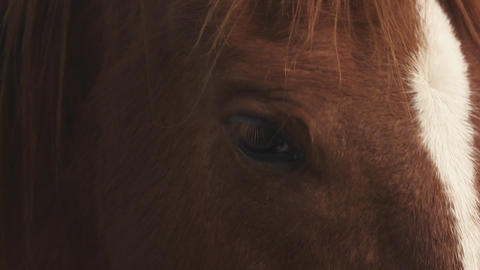 Sardinia Horse, Italy stock footage